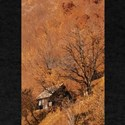 Remote Mountain Cabin in Autumn Blaze of C T-Shirt